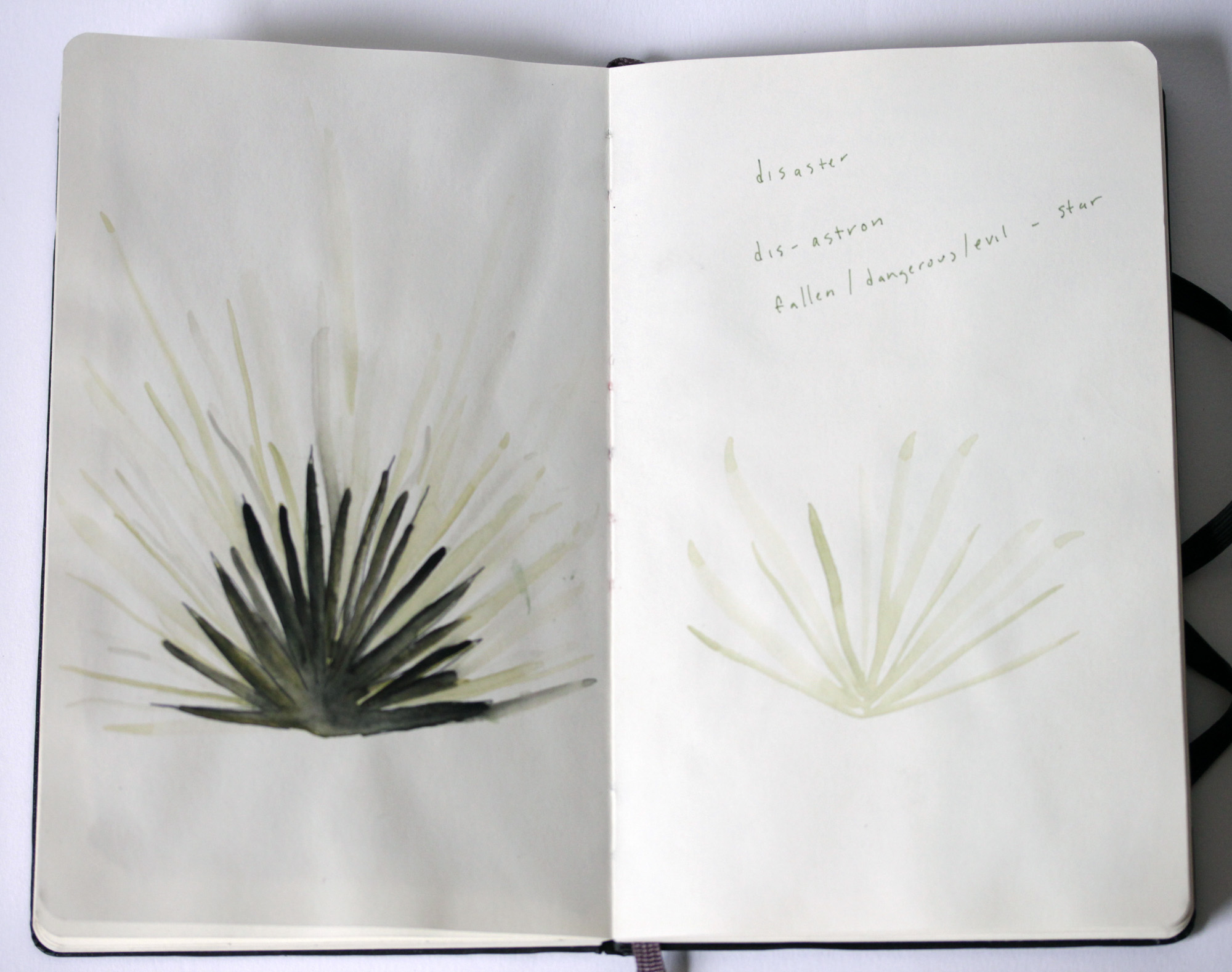 agave watercolor / notes for a zine
