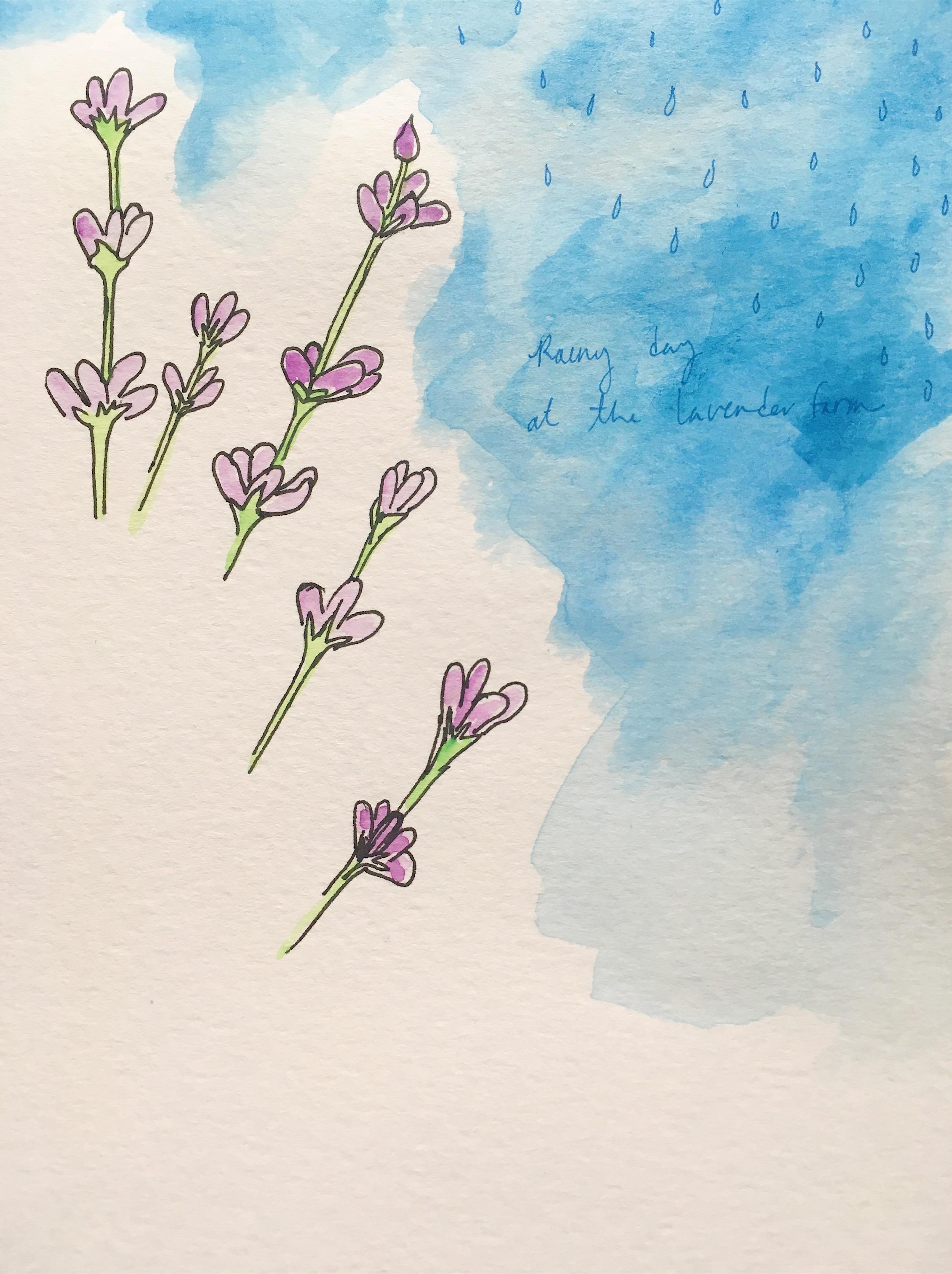 rain day at the lavender farm