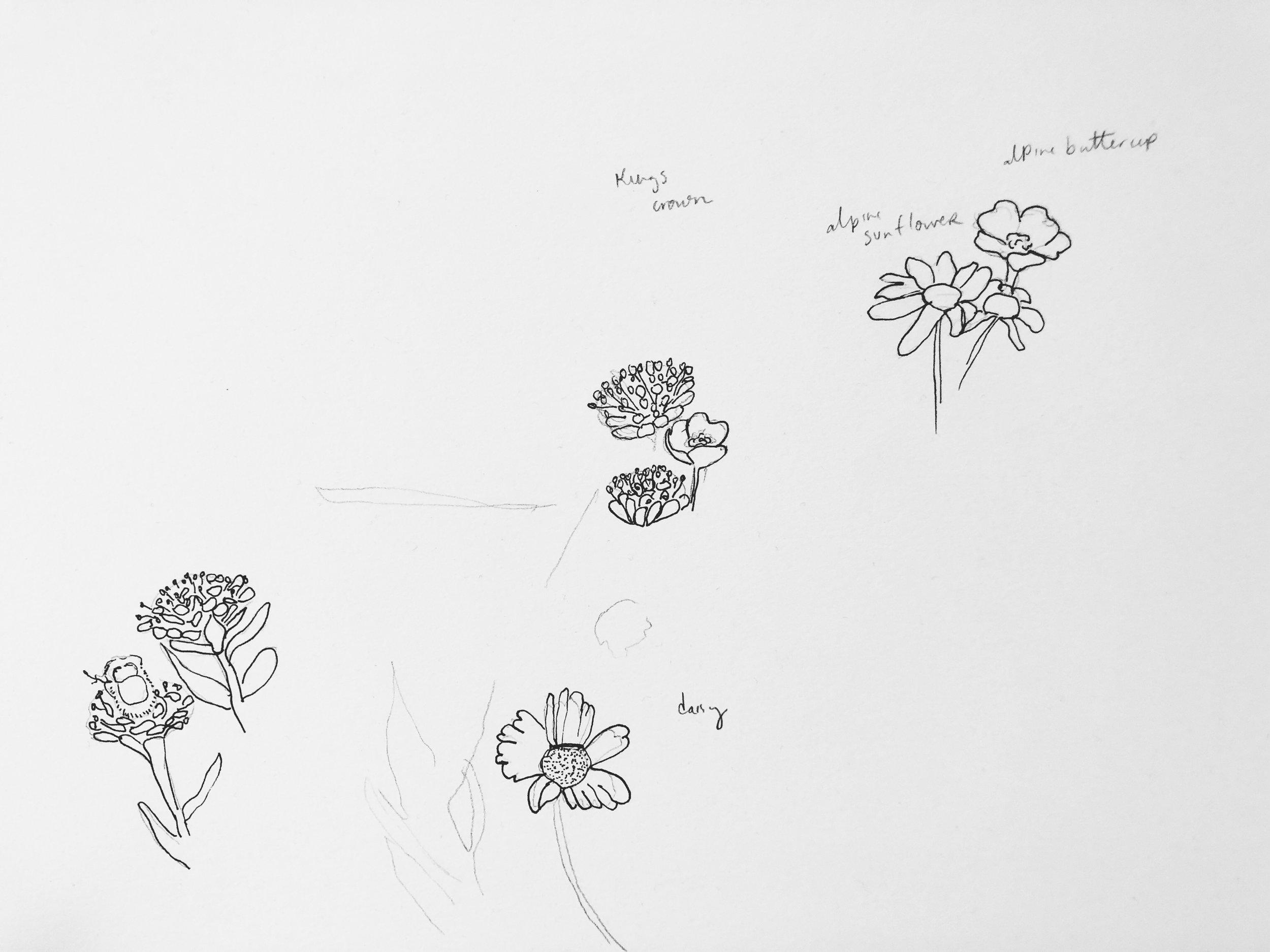 colorado wildflowers rebecca mir grady