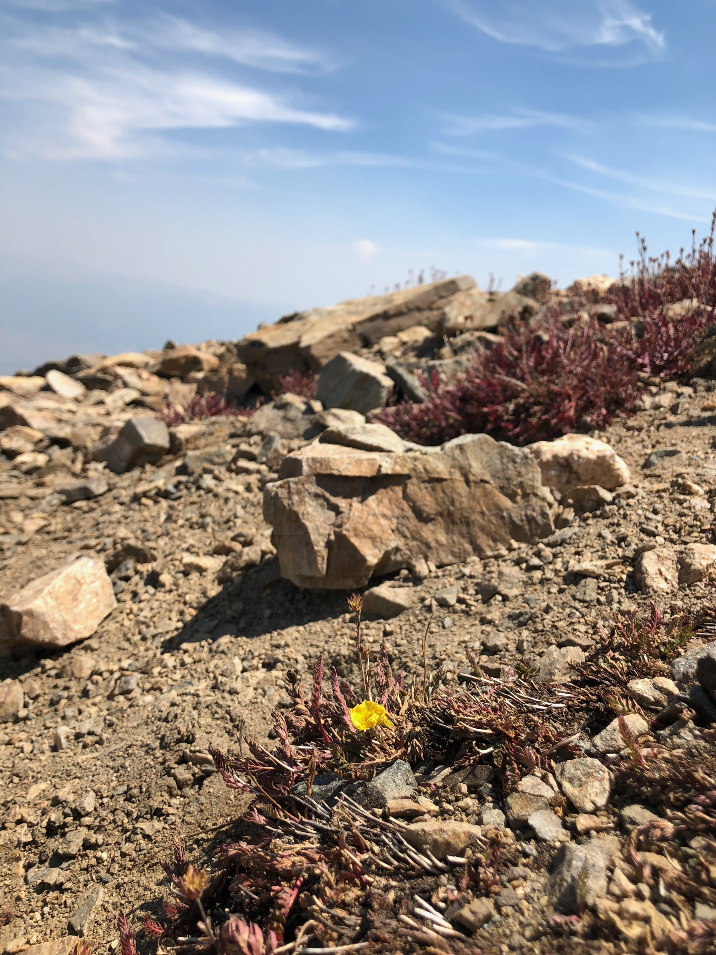 Last of the wildflowers on the mountain