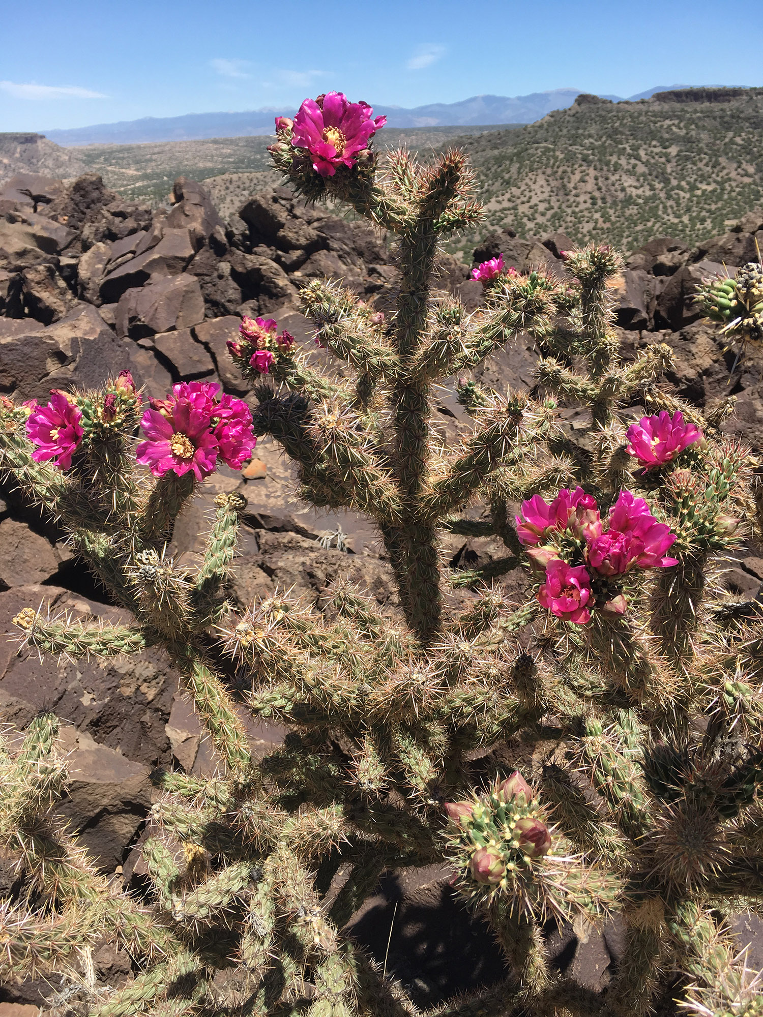 May: Desert blooms I love you
