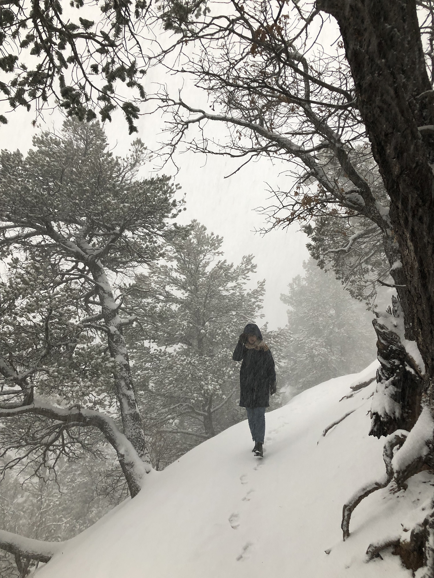 snowstorm on the mountain