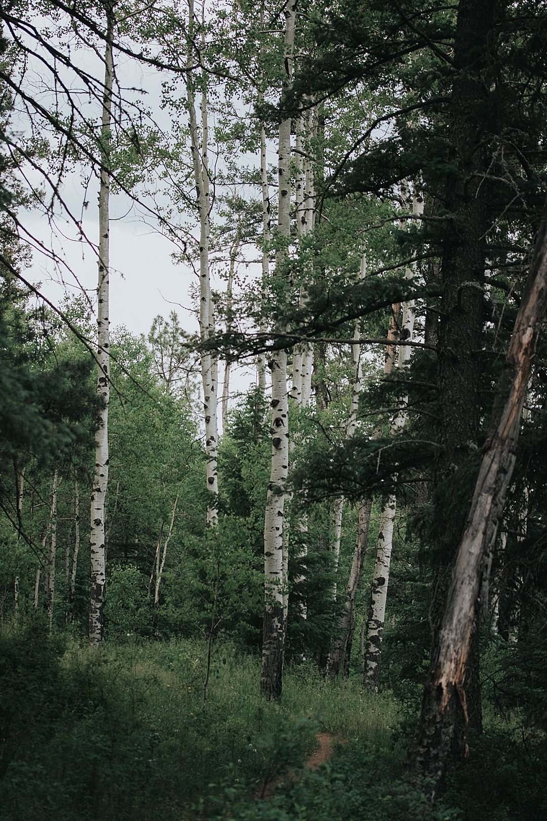 A Night in the Pecos Wilderness