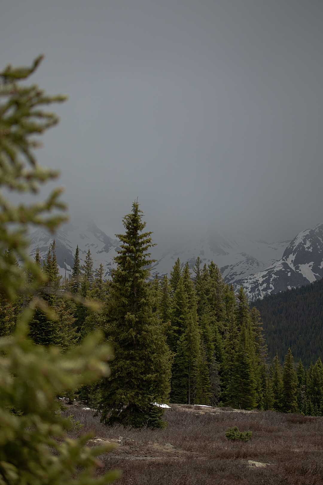 Almost Summer in the San Juan Mountains
