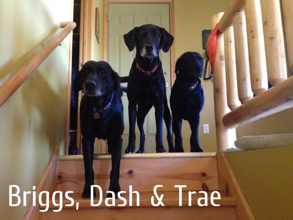 Briggs, Dash & Trae.jpg