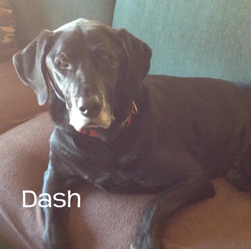 Dash.jpg