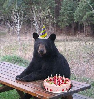 Happy Bearthday!