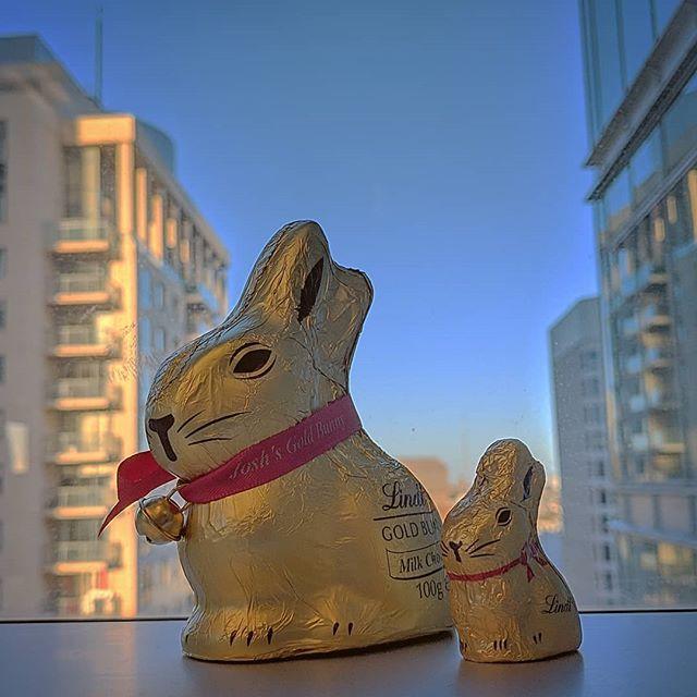 Merry Eastermas!  #lindtbunny