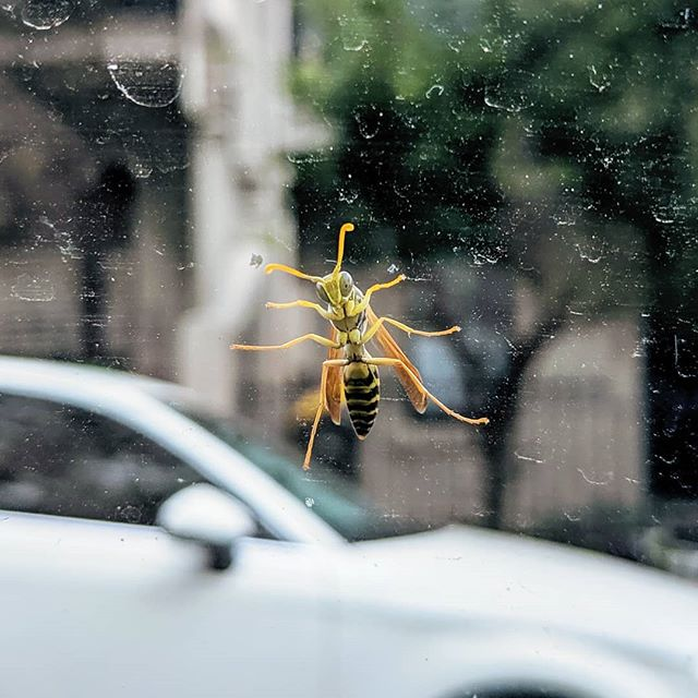 This little sumbitch would just not let go of the window at even 60km/h. Katie had to save me.
