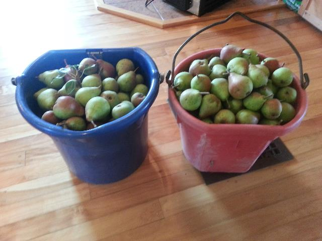 Our bounty!