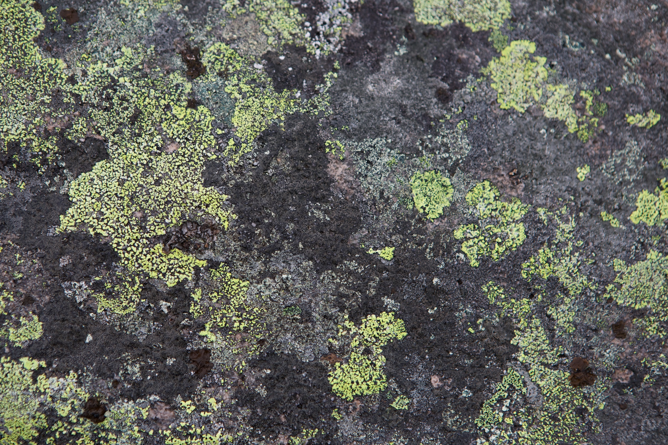 WKFlora 065.jpg