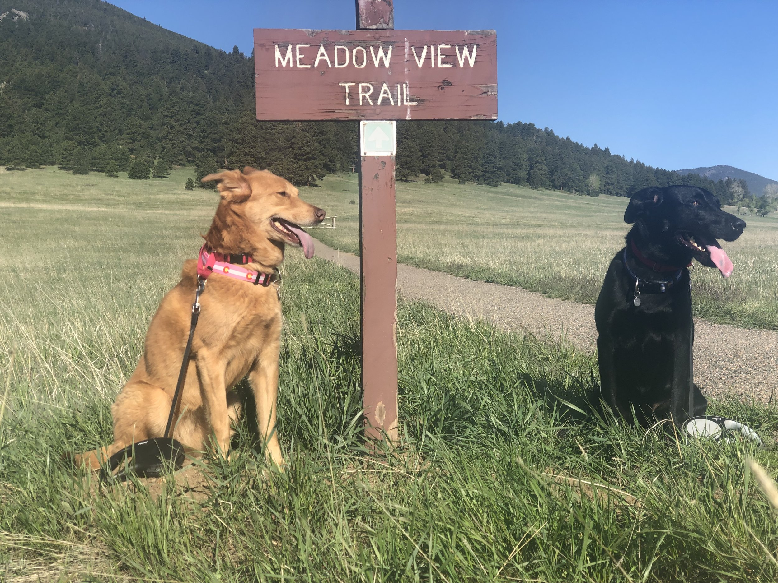 Lucy and Ozzie adore Elk Meadow. ©Suzanne Brown 2019