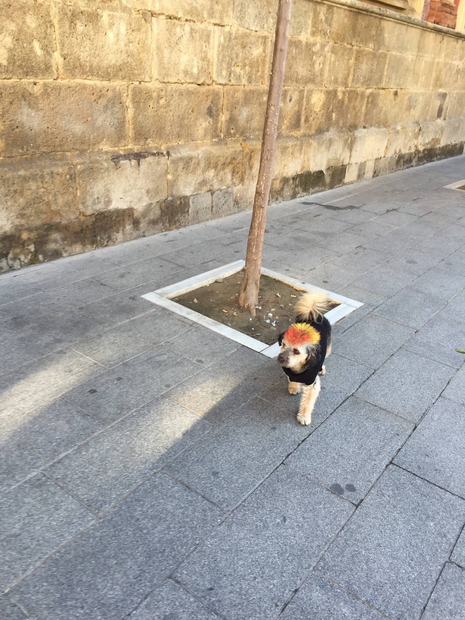 One of the many 'glamourdogs' of Seville.