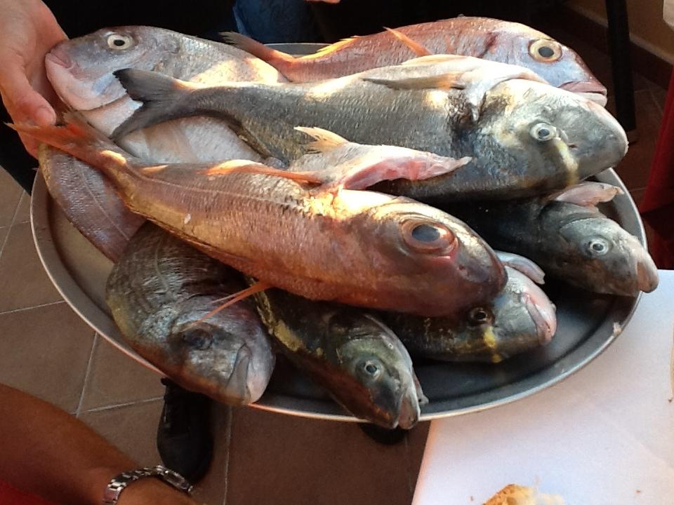 Catch of the day at Ristorante Da Giacomino on Elba