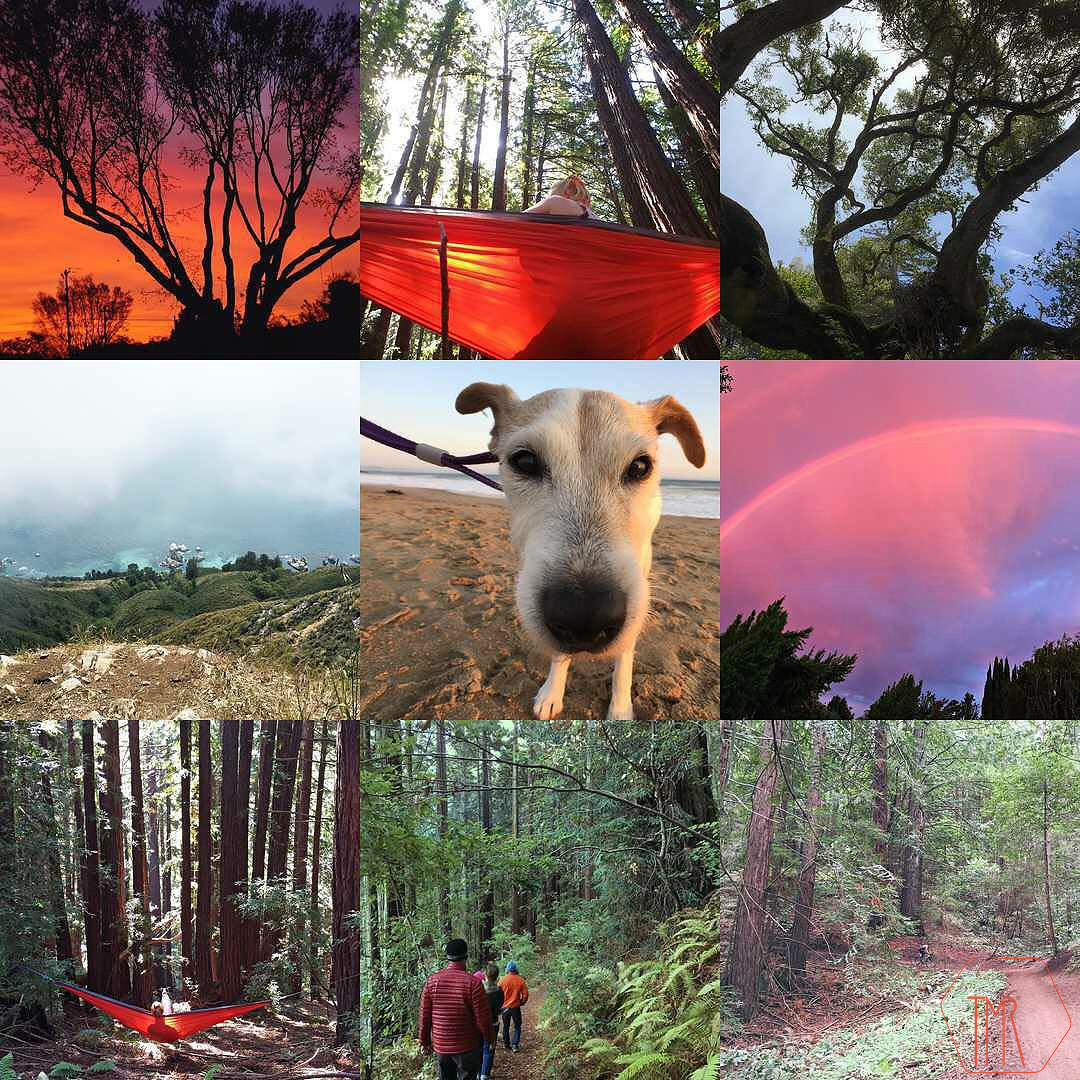 The best nine images from Instagram in 2015
