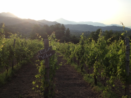 Parts of Irpinia are at the same elevation as Denver which means while the tourists are boiling hot in Rome, we'll have cool, dry temperatures perfect for exploring vineyards and ruins.
