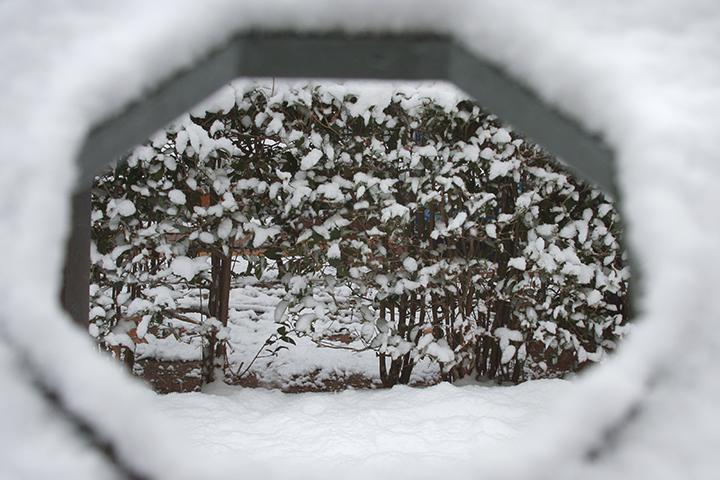 piercing through snow