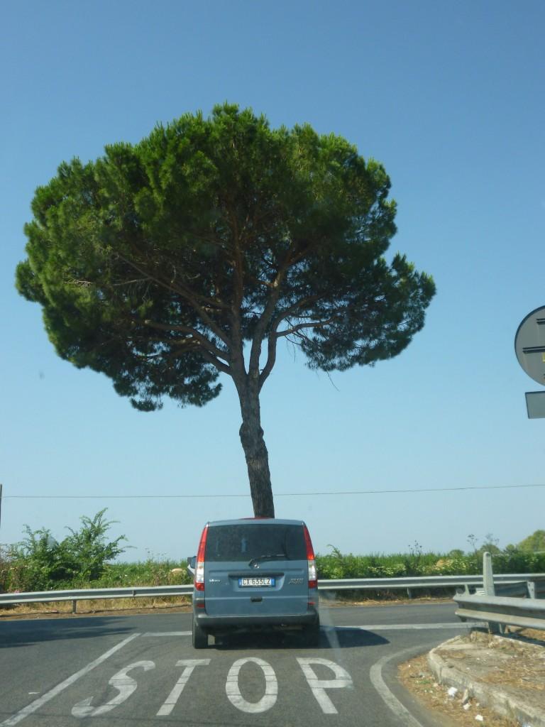Sabaudia. Italia. VGA