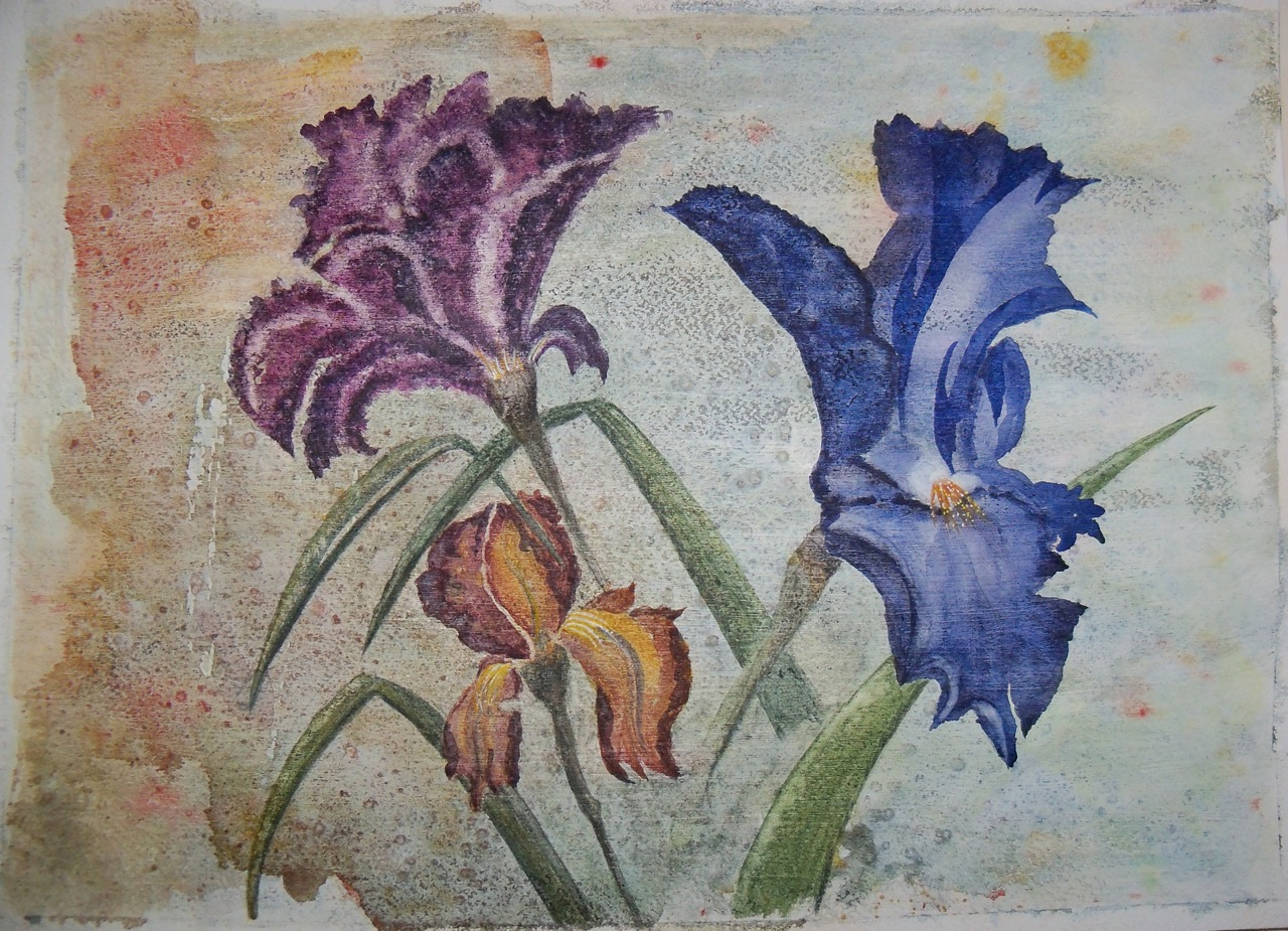 """Heather Solway  Dancing Irises , 2014 watercolor on Arches 140 paper 12"""" x 16"""" $250"""
