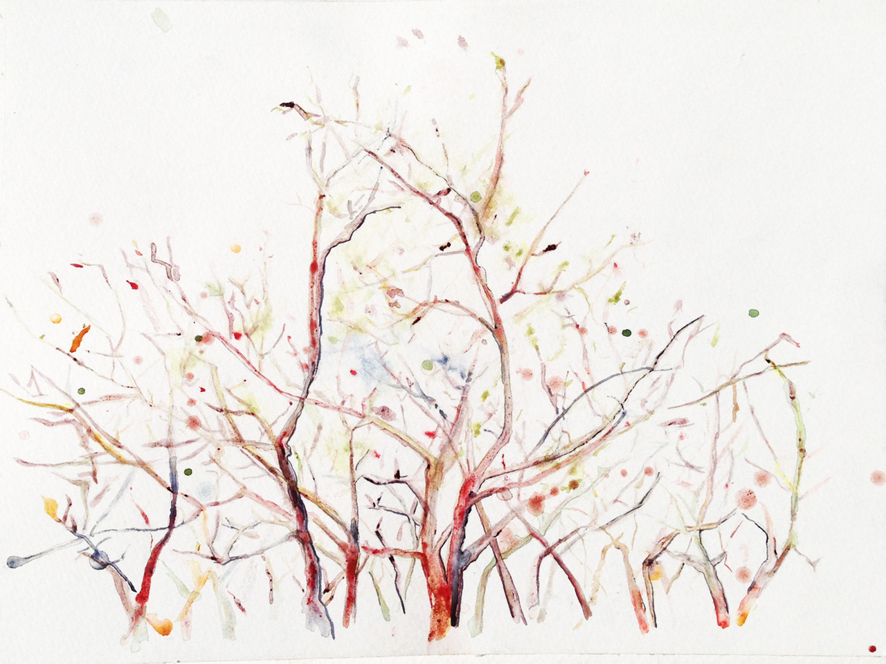 "Audra Bauchera   Branches , 2014 watercolor 8"" x 10"""