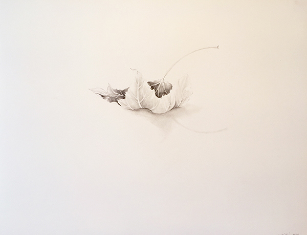 "Sheila Ghidini  Maple Leaf , 2016 graphite drawing 16 x 20"" courtesy of Chandra Cerrito Contemporary"