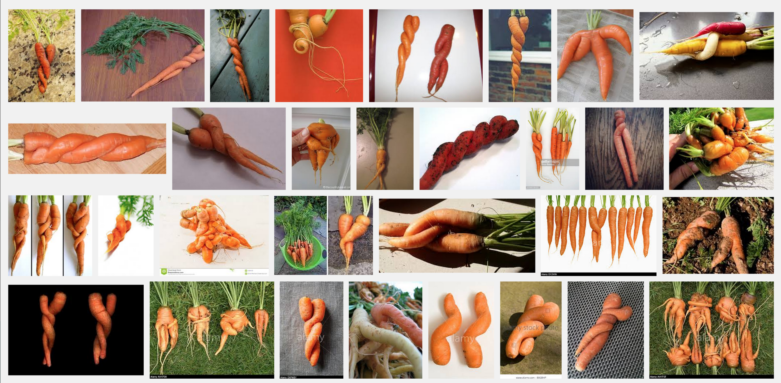 Google search of 'carrots twisted.'