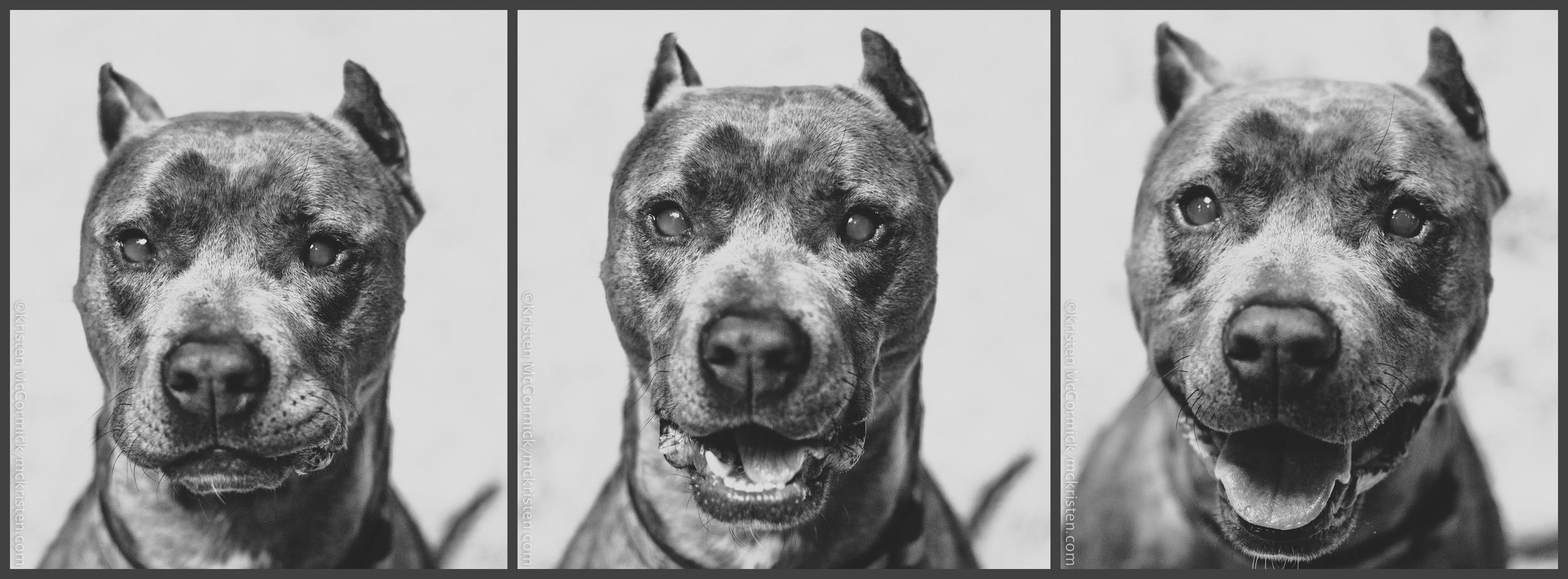 Frankie Triptych .jpg