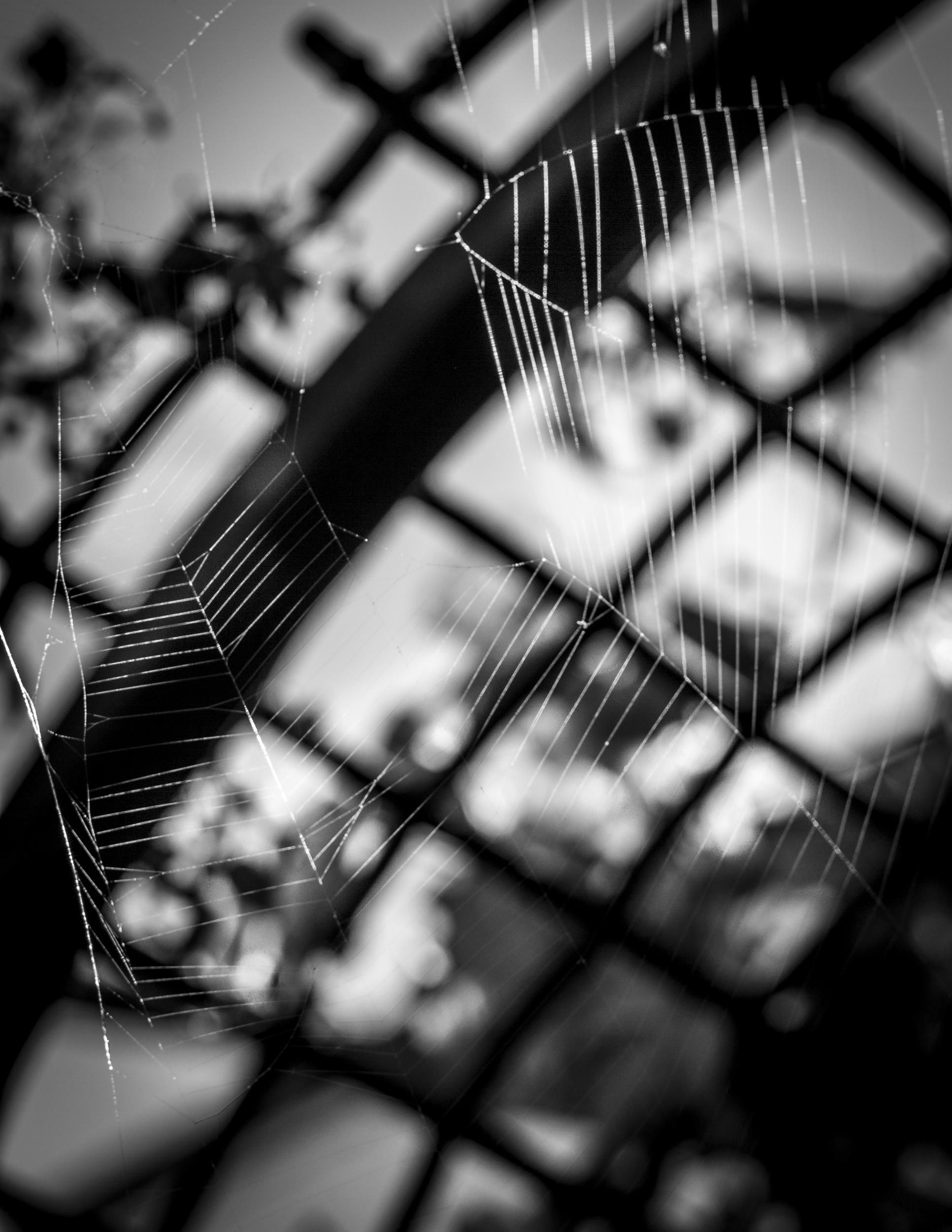 """Charlotte's Web"""