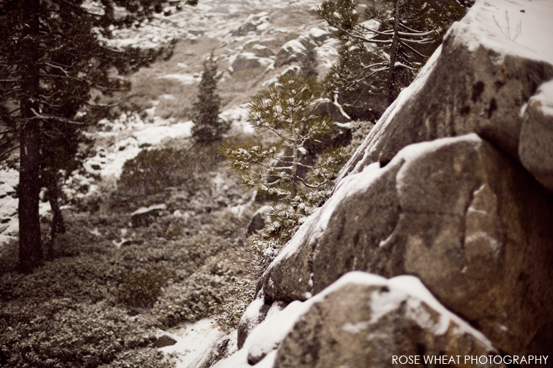 Tree_Boreal_Winter_Snow_Rose_Wheat_Photography-B.png