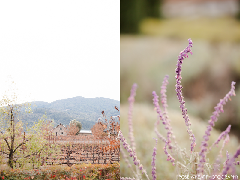 14.-Napa_Valley_Overcast_Day_view_from_Peju_rose_wheat_Photography.png