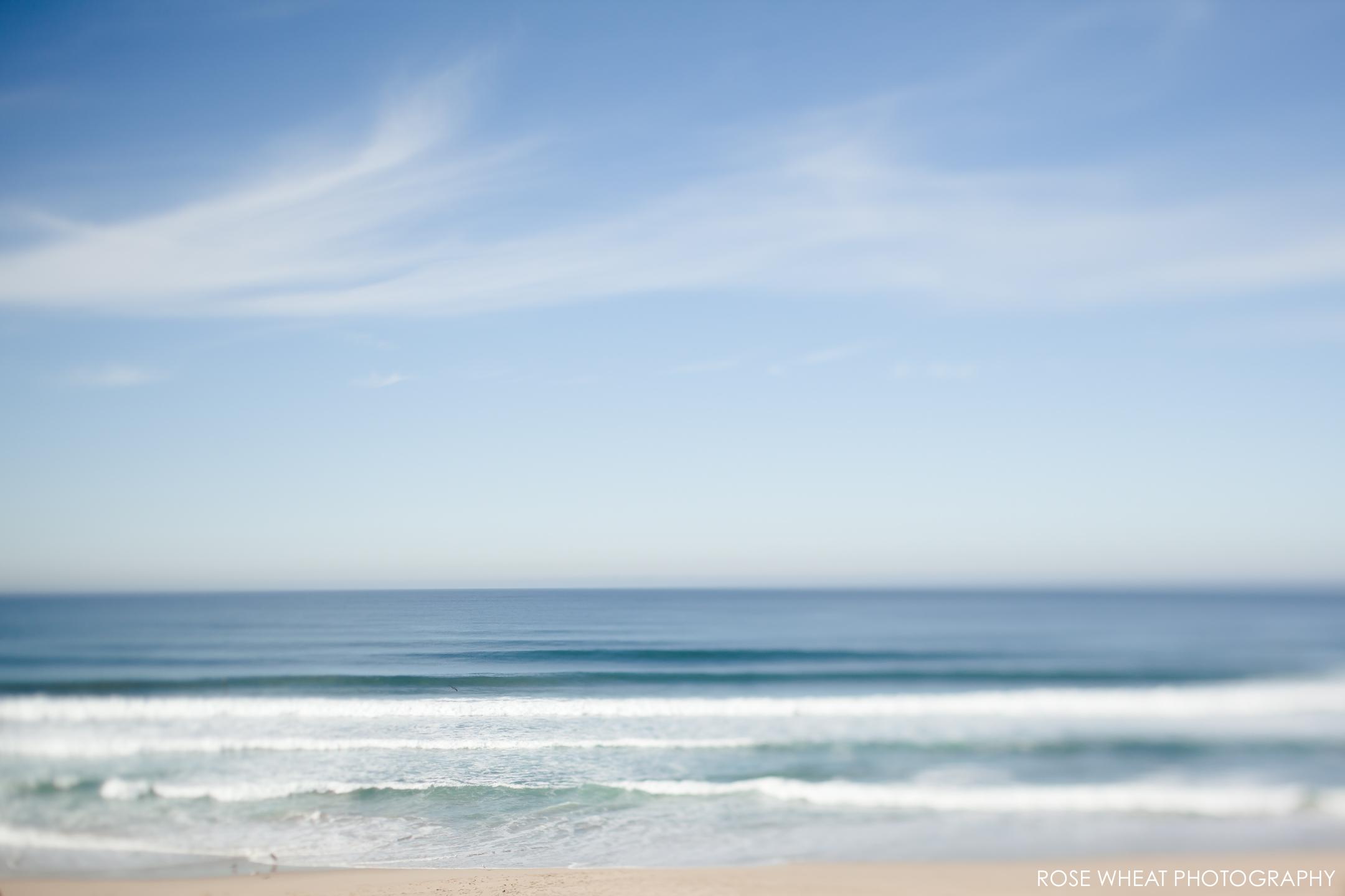 Salinas_Beach_Rose_Wheat_Photography.jpg