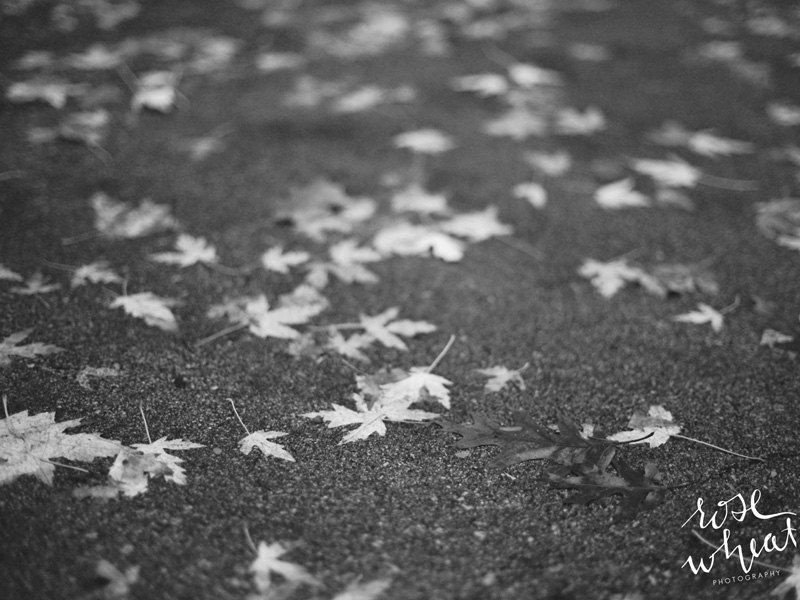 15. mamiya_645_pro_tl_fall_leaves_black_and_white.jpg