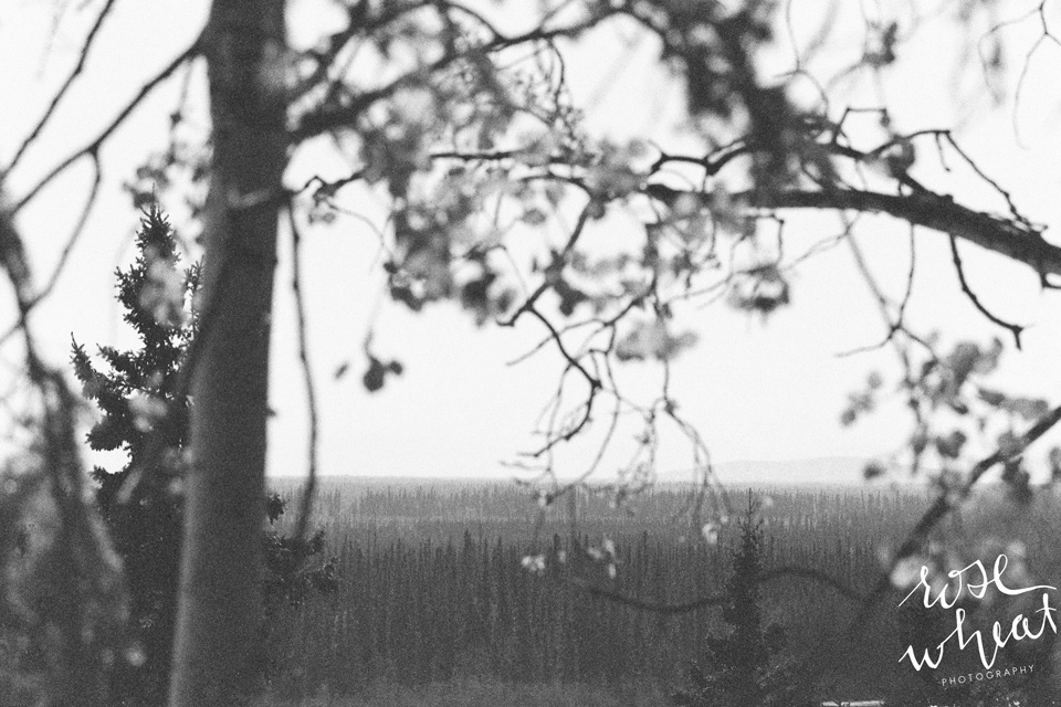 Fairbanks_Film_TMAX_400_Canon_Elan_7_35mm_Rose_Wheat_Photography-7.jpg
