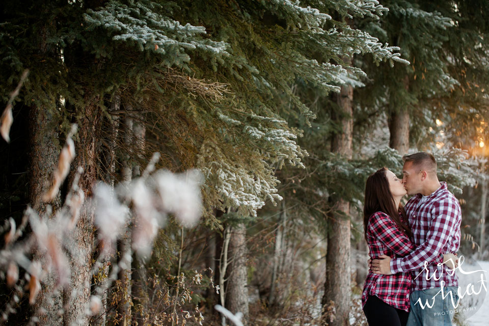 003. Bushnell_Family_Winter_Session_Rose_Wheat_Photography.jpg