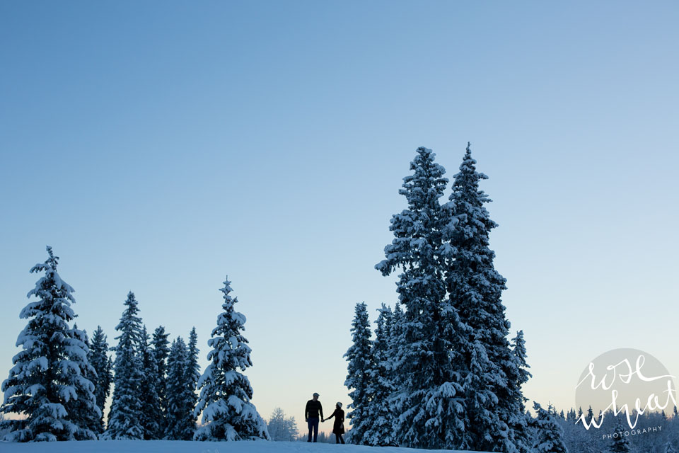 006.  Fairbanks_Alaska_Winter_Engagement_Spruce_Trees_Huskie.jpg