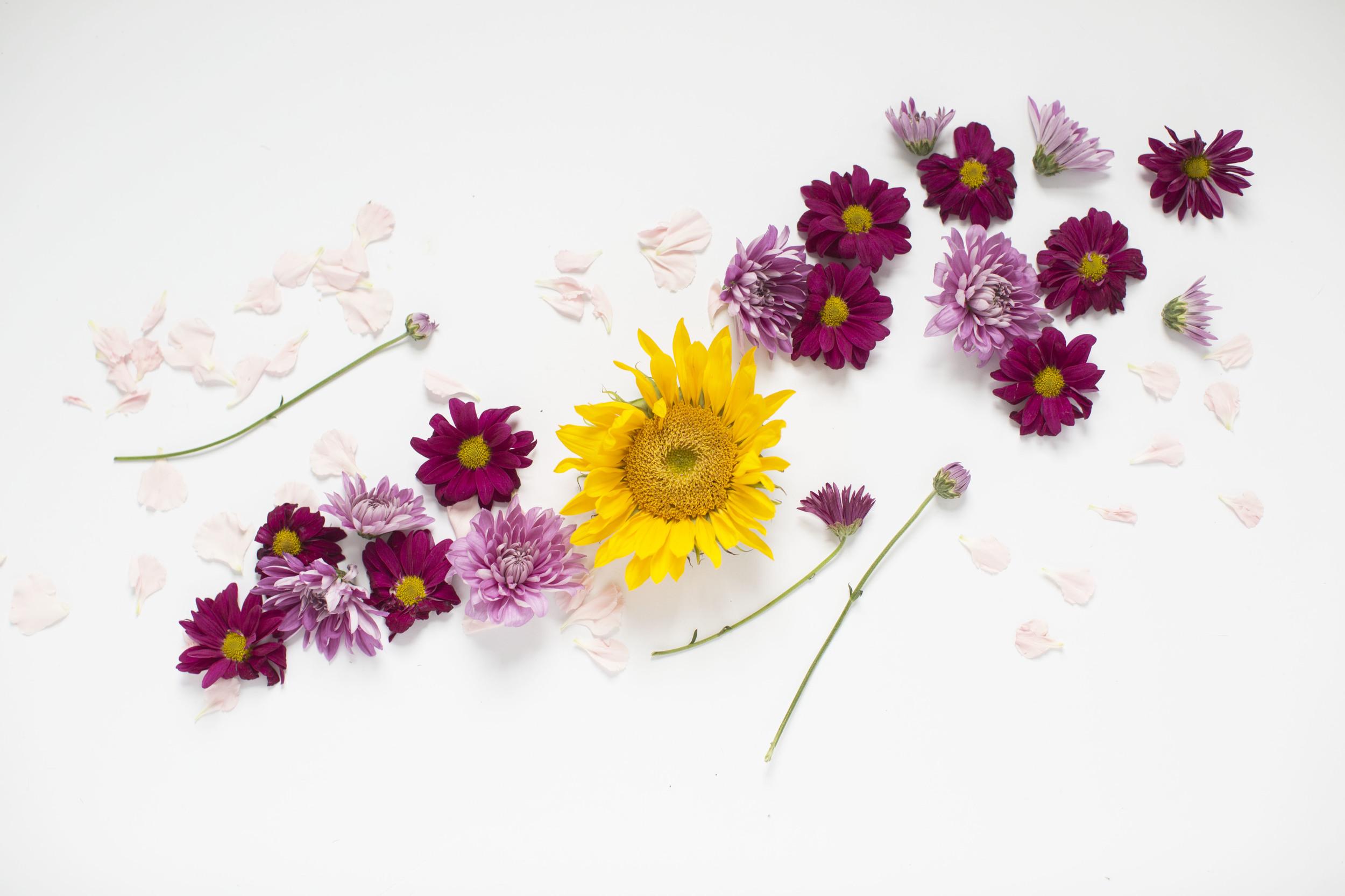 Sunflower_Florals.jpg