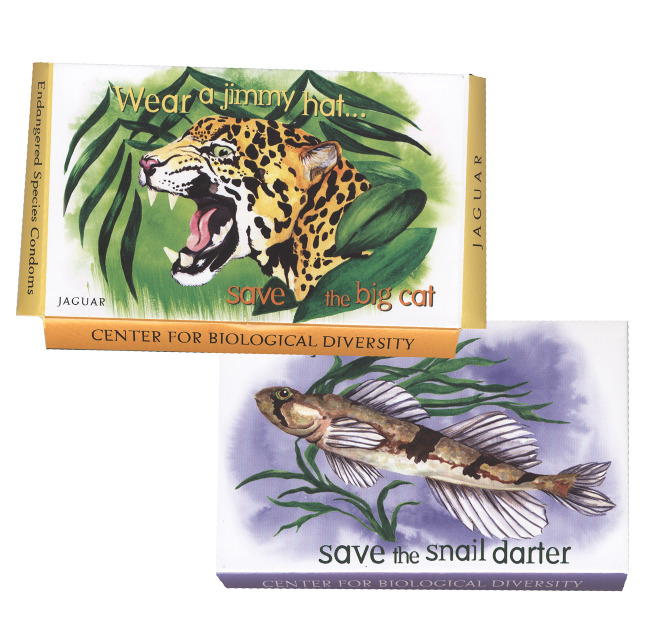 I created illustrations for the first series of art for The  Endangered Species Condom Project  which won 2 Addy Awards & was featured in the New York Times. Over 450,000 endangered species condoms featuring these illustrations have been given out nationwide.
