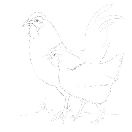 Chickensrevisedwebsubmission.jpg