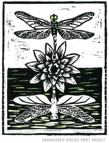 dragonfly_WEB.jpg