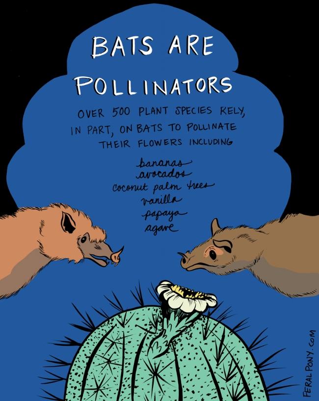 BatsArePollinators.jpg
