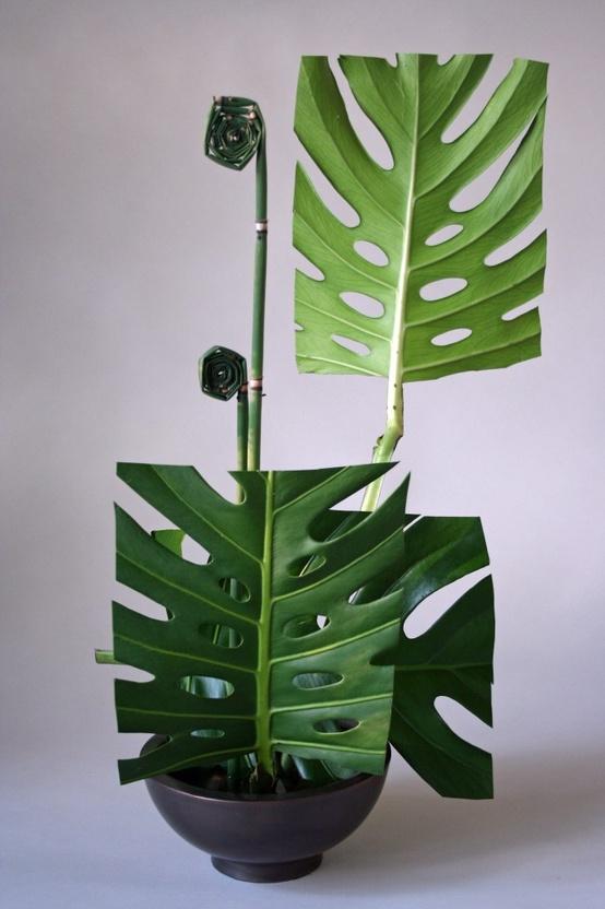 Keith Stanley | Leaf Manipulation