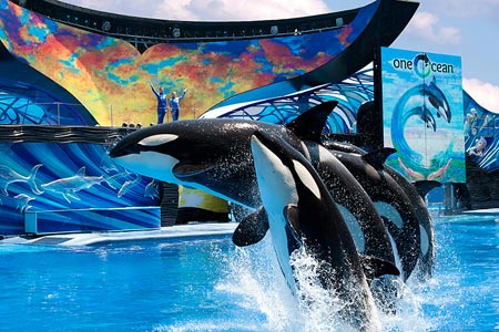 SeaWorld-Slide.jpg