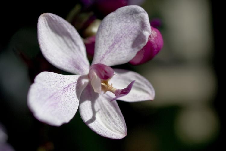 2015_Longwood Orchids_02.jpg