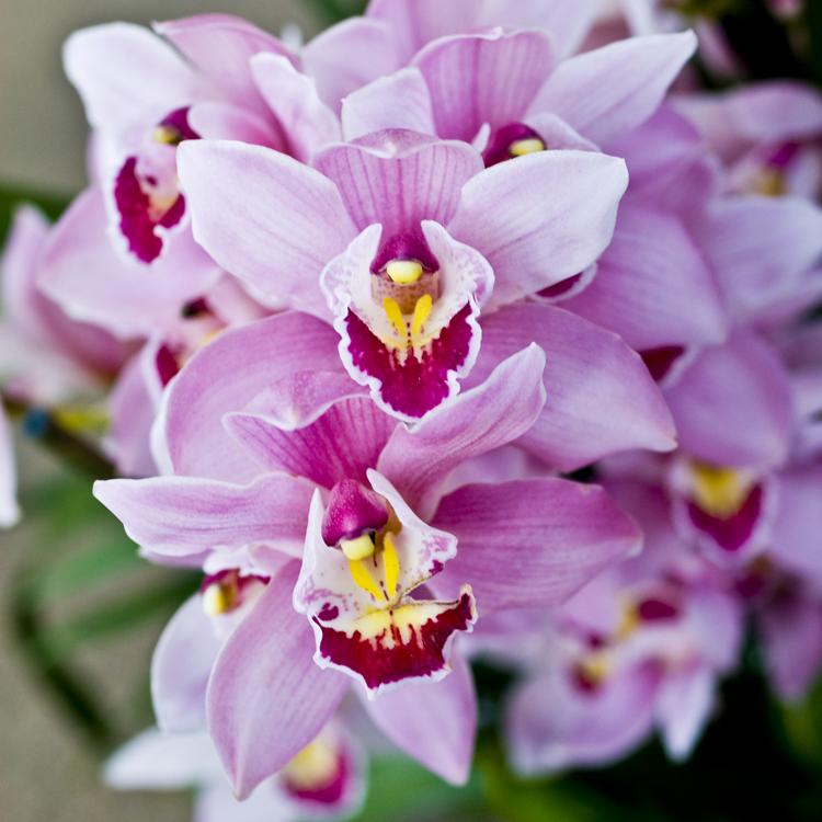 2015_Longwood Orchids_10.jpg