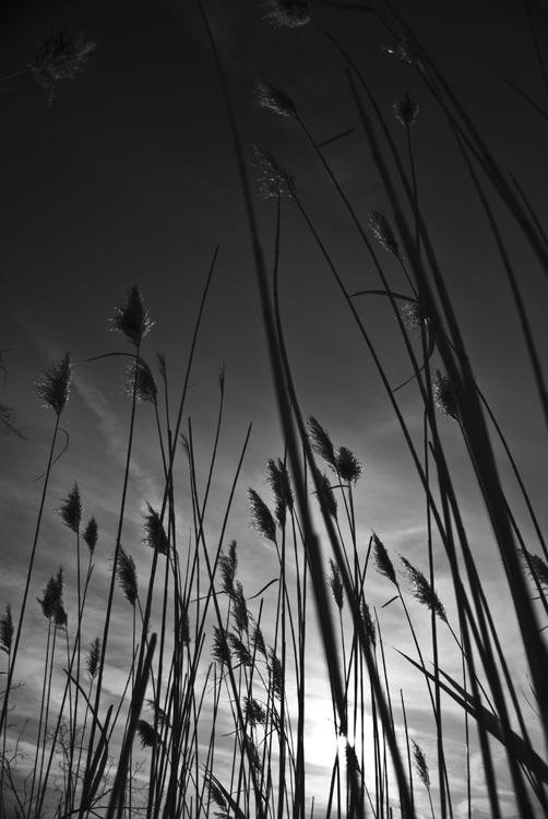 Tall Grass 05.jpg