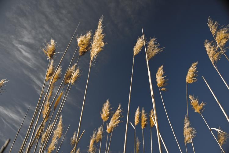 Tall Grass 08.jpg