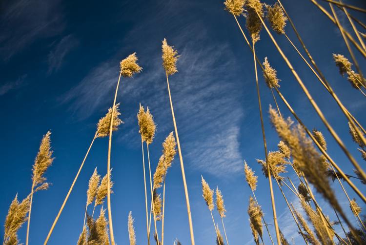 Tall Grass 11.jpg