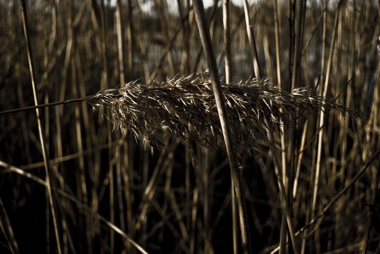 Tall Grass 13.jpg
