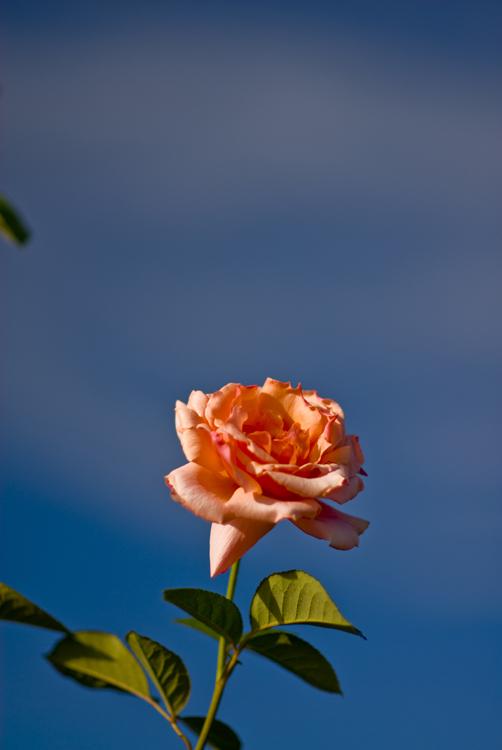 2012 09 15 Longwood Gardens 18.jpg