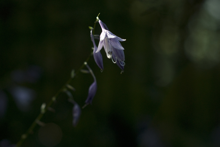 2012 09 15 Longwood Gardens 19.jpg